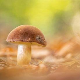 paddenstoel van Gonnie van de Schans
