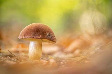 Scène d'automne aux champignons sur Gonnie van de Schans