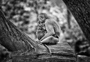 Mutter Affe mit Baby von Chihong