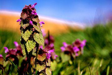 Concept flora : Gattung Fingerhut van