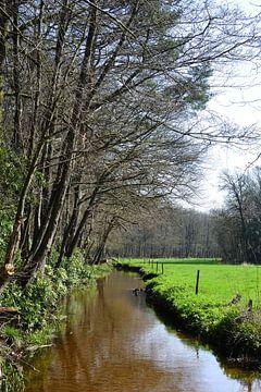 Un ruisseau à la lisière de la forêt sur Gerard de Zwaan