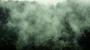 Het bos ademt van