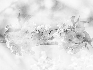 Fleurs sur Marije Rademaker