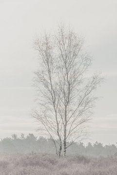 Eenzame boom van Ellen Metz