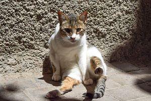 Starrende Katze auf dem Boden