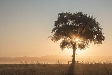 zonsopkomst van ina van zandwijk