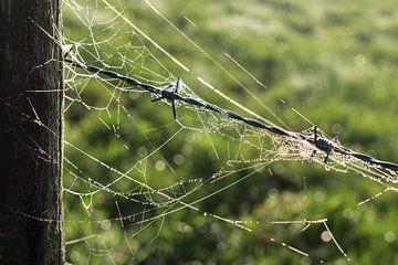 Spinnenweb en prikkeldraad