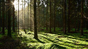 bos van Günter Albers