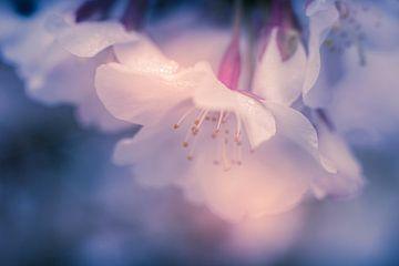 Verträumte Blumen von Cathy Roels