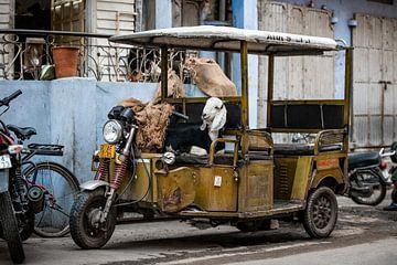 Geit in tuktuk    Jaipur India   Reis fotografie van Lotte van Alderen