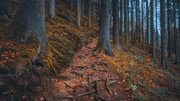 Volg gewoon de wortels van Joris Pannemans - Loris Photography