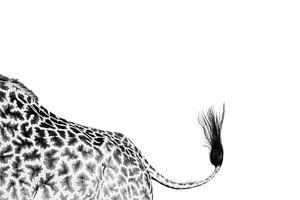 Giraffe staart van