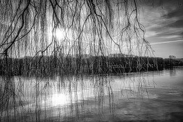 Treurwilg aan de Baldeneysee in tegenlicht in zwart-wit van Dieter Walther