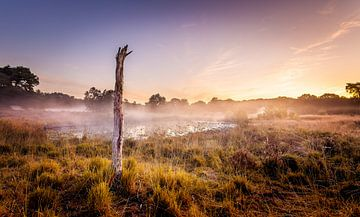 Nationalpark De Meinweg von Juul Hekkens