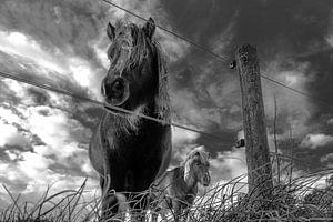 Dark Horse van