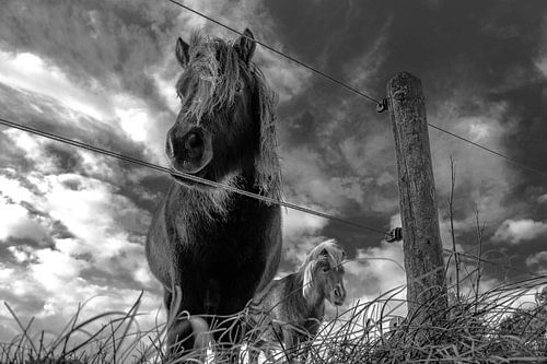 Dark Horse van Dick Hooijschuur