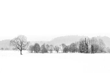 Panorama Winter Landschaft mit Schnee in schwarz-weis high-keys von Dieter Walther