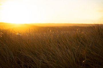 Sonnenaufgang über den Dünen von Fotografiecor .nl
