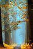 Magical Autumn van Lars van de Goor thumbnail
