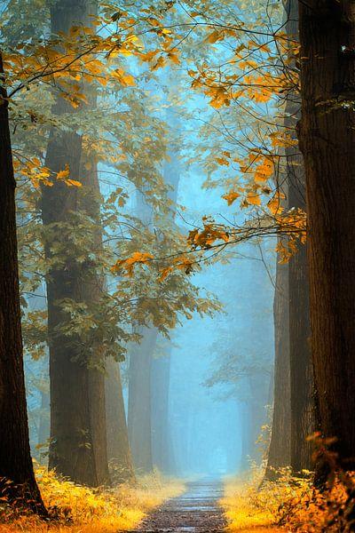 Magical Autumn van Lars van de Goor