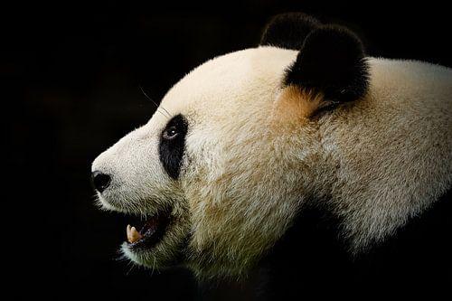Pandabär Portrait von Mathijs Frenken