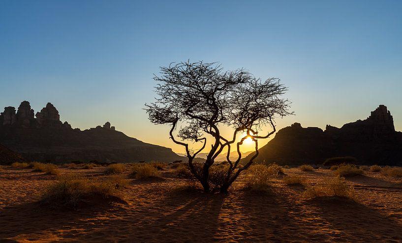 Woestijnboom tijdens zonsondergang van Jeroen Kleiberg