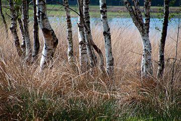 het wit, bruin en blauw (berkenstammetje, bruin gras,blauw water) van wil spijker