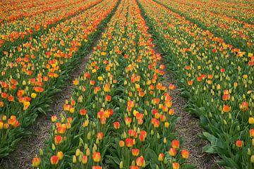 Reihen von Tulpen von Martijn Stoppels