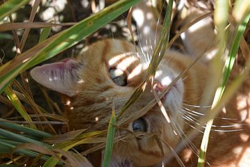 Kat in een graanveld van Gerdine Aret