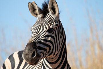 Zebra in Südafrika von Eline en Siebe Weersma