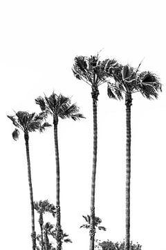 Palmidylle van Melanie Viola