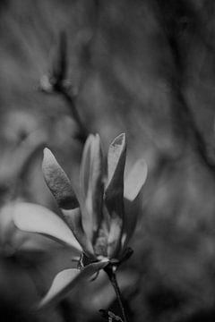 Blume mit Bokeh schwarz und weiß von Sanne van Pinxten