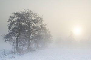 Zonsopkomst door de mist van