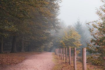 Wandern im Oktober von Tania Perneel
