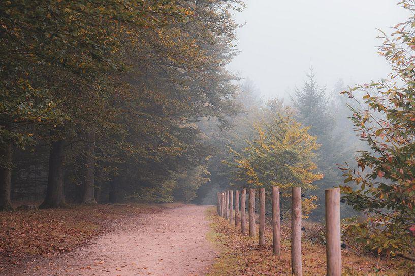 wandelen in oktober van Tania Perneel