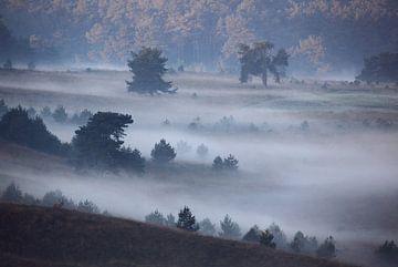 Edelhert in mistig landschap van Marcel de Bruin