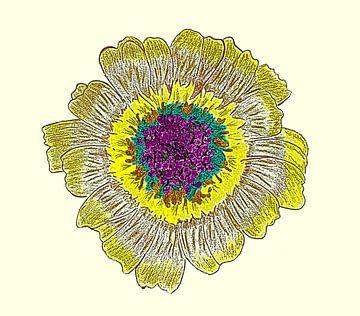 Gänseblumenzeichnung / Radierung von Jose Lok