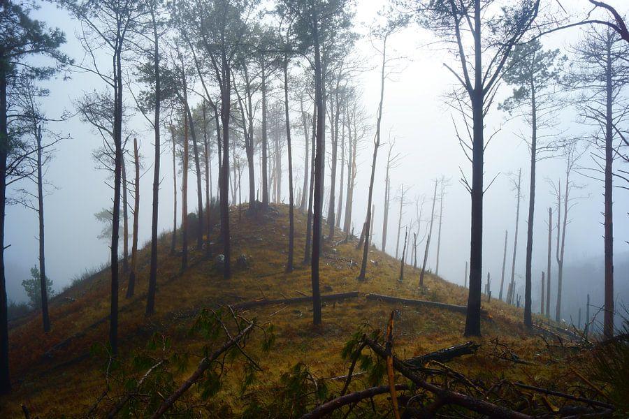 Mistig bos van Michel van Kooten