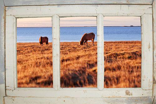 Boerderijraam met paardjes uitzicht van Co Seijn
