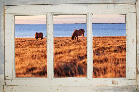 Boerderijraam met paardjes uitzicht
