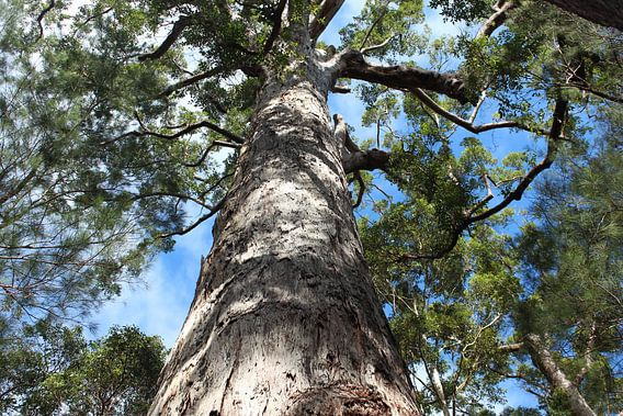 Kijk omhoog in deze boom