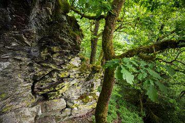 Landschaft mit Eiche im Wald mit Felsen von Ger Beekes