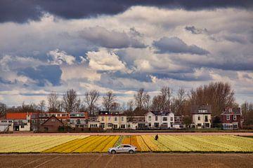maisons de campagne en jacinthe sur Peter Heins