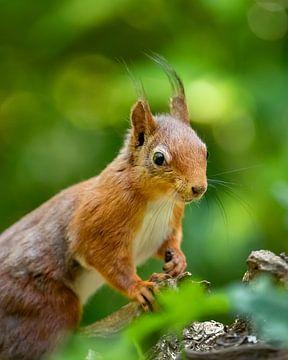 Portrait d'écureuil sur Karla Leeftink