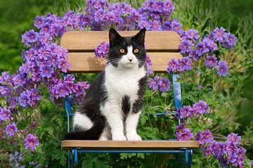 Schwarz weiße Katze sitzt auf einem Gartenstuhl von Katho Menden