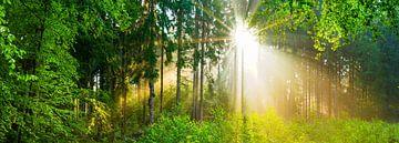 Ein wundervoller Morgen in der Natur von Günter Albers