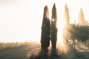 Sonnenlicht erhellt Zypressen mit Lichtstrahlen von Besa Art