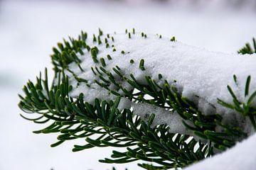 Dennentakken met sneeuw van Ingrid de Vos - Boom