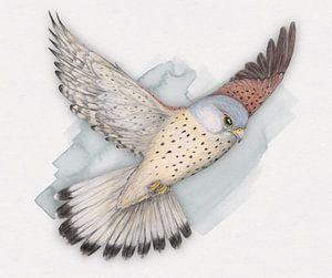 Vliegende torenvalk van Bianca Wisseloo