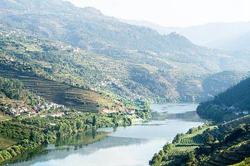 Douro-Rivier tussen Wijngaarden: Portugal van The Book of Wandering